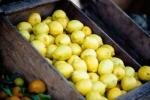 TLT week 15: lemons