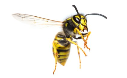 flash fiction day 2016, wasp