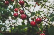three line tales week 27 – red cherries