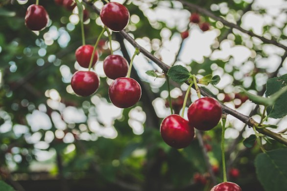 three line tales week 27 – red cherries