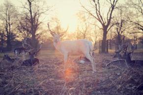 three line tales week 35; deer at sunset