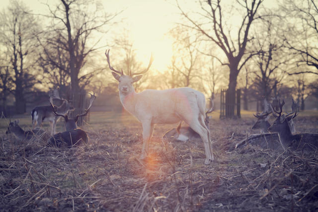 three line tales week 35; deer at sunset