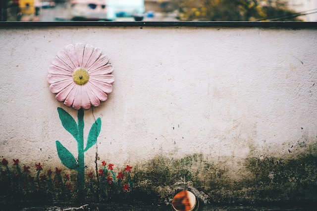 a flower on a wall