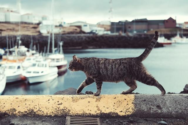 A cat on a wall near a port