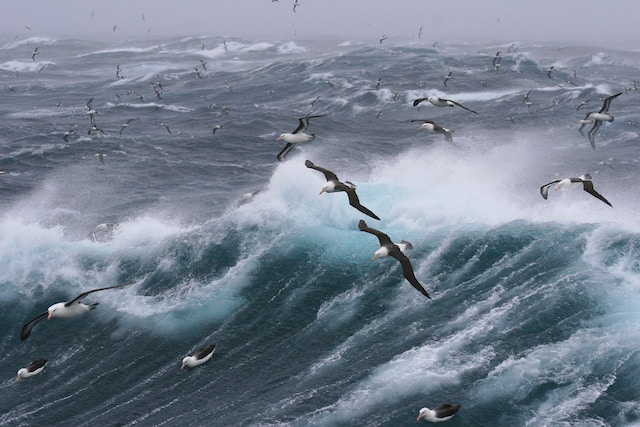 three line tales, week 148: gulls over a stormy sea