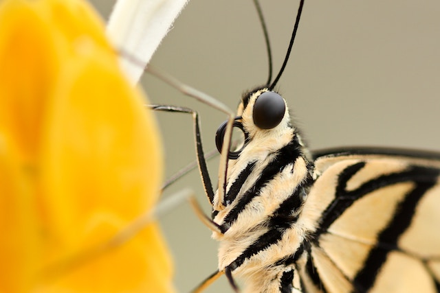 three line tales week 149: a close up of a butterfly