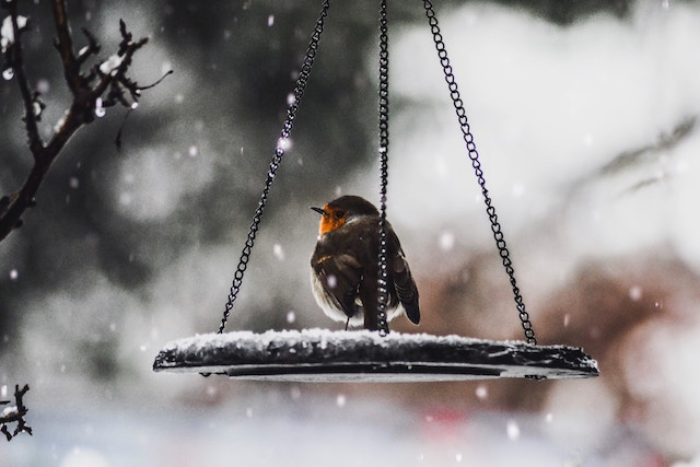 Three line tales, week 157: a robin in a snowy bird feeder
