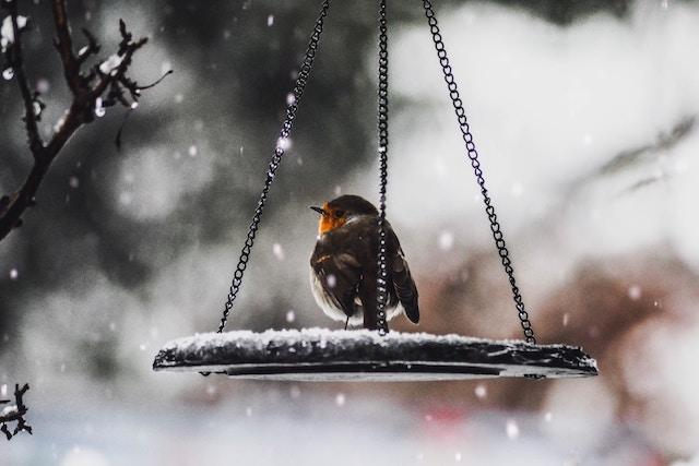 Three line tales, week 157: a robin in a snowy bird feeder