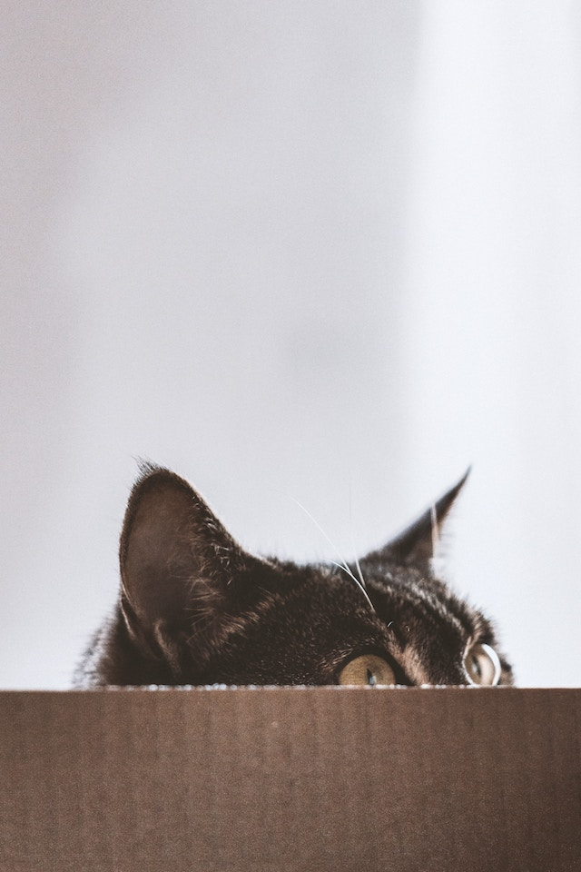 three line tales, week 189: a cat peeking out of a cardboard box