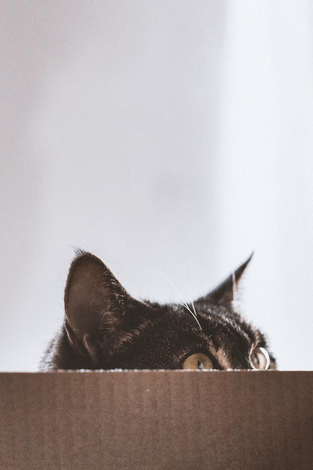 three line tales, week 189: a cat peeking out of a cardboard box