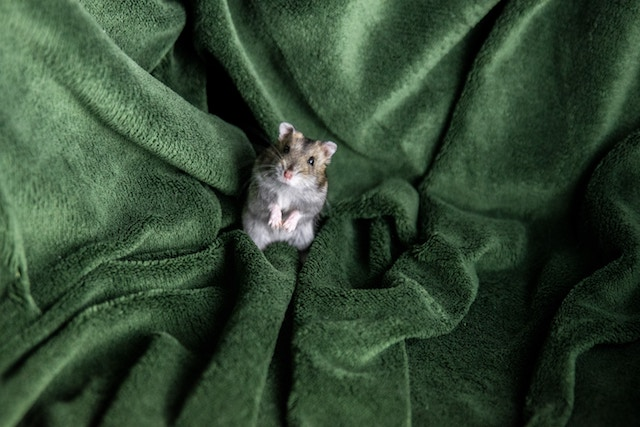 three line tales, week 204: a hamster in a bit plush green towel