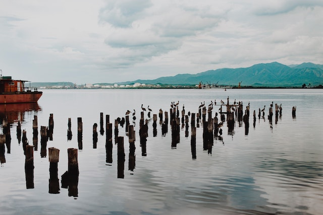 three line tales, week 221: wooden posts in a lake