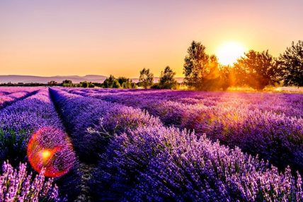 three line tales 235: a lavender field at sunset