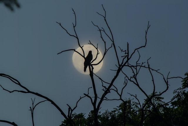three line tales, week 249: a crow in front of the full moon at dusk