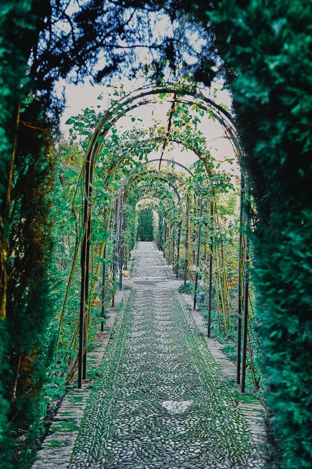three line tales, week 244: a walkway in a rose garden
