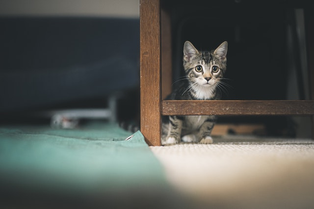 three line tales, week 261: a kitten underneath a table